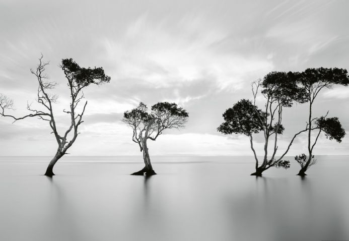 Photo wallpapers Trees In The Still Water | Shop online